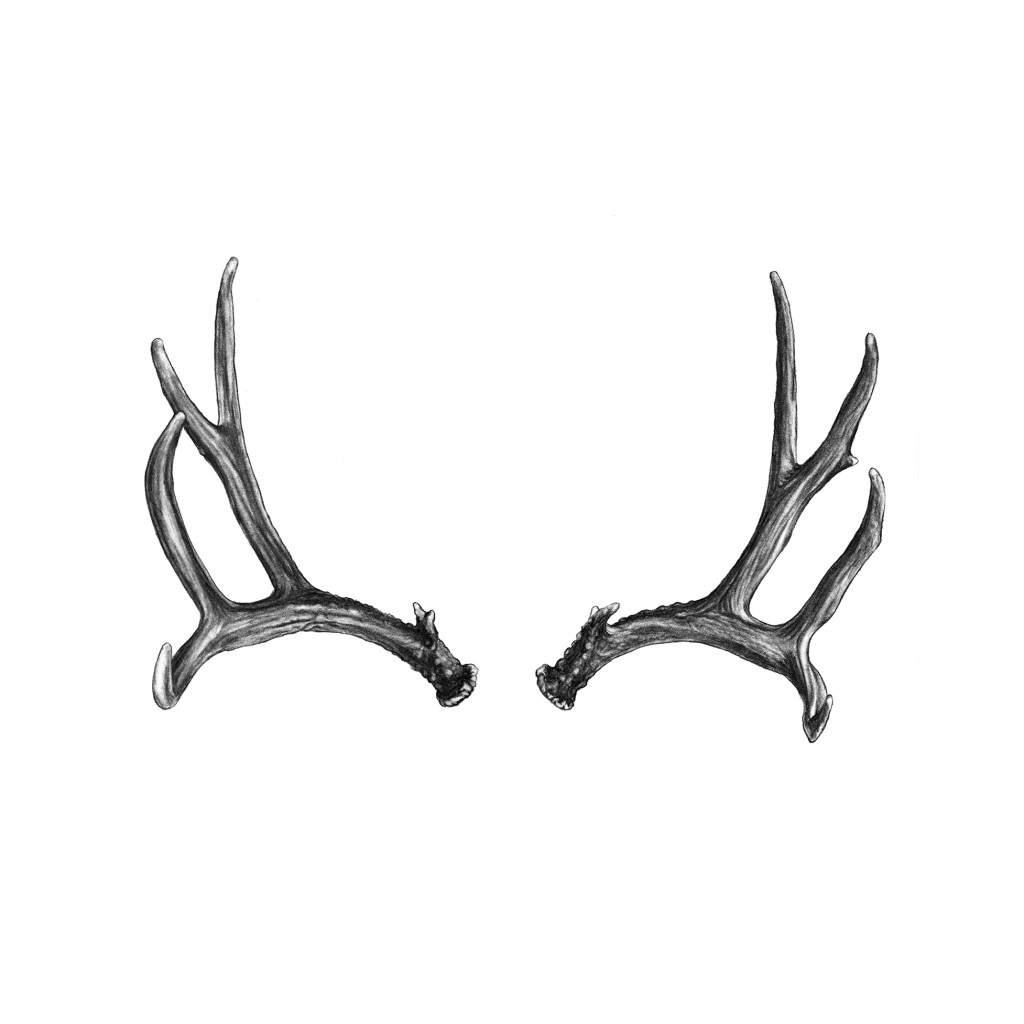 deer antlers drawing easy - photo #18